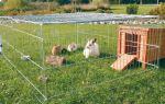 Как правильно содержать кроликов в вольерах?