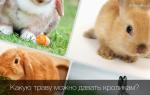 Можно ли давать кроликам свежую луговую траву или лучше сеять ее самому?