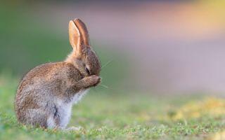 Чихание кроликов: причины, первая помощь, способы лечения