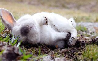 Что приводит к смерти взрослых кроликов и крольчат?