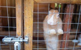 Что делать, если кролики грызут деревянные клетки, и почему такое случается?