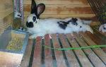Как сделать кормушку для кроликов своими руками?