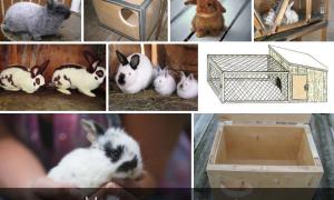 Как сделать маточник для кроликов своими руками?