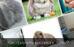 Как правильно приучить кролика к туалету в домашних условиях?