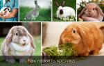 Имена для декоративных кроликов, мальчиков и девочек