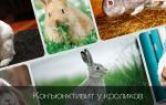 Как лечить конъюнктивит у кроликов в домашних условиях?