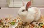 Чем кормить кроликов декоративных пород