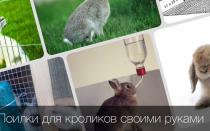 Как правильно сделать и установить поилку для кроликов?