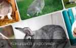 Кокцидиоз у кроликов и лечение народными средствами