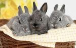 Почему у кроликов иногда выпадает шерсть?