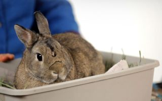 Кролик ничего не ест и не пьет: причины и что делать
