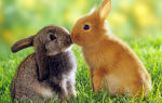 Особенности разведения кроликов в яме