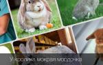 Что делать, если у кроликов мокрые мордочки и чем лечить?