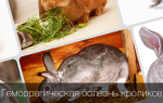 Как лечить геморрагическую болезнь кроликов?