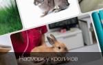 Что делать если у кролика сопли и чем его лечить?