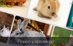 Лечение поноса у кроликов в домашних условиях