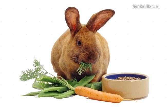 Чем правильно кормить крольчиху после окрола?