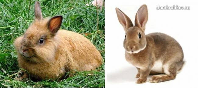 Кормление кроликов в домашних условиях: что должно входить в 82