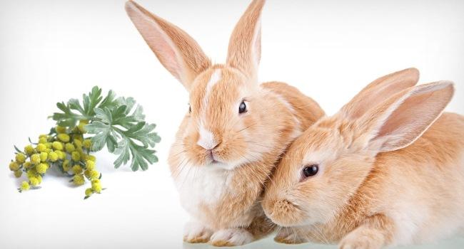 Полынь для кроликов