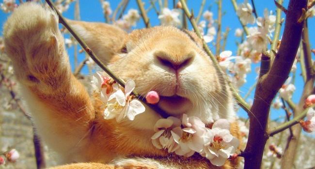 Какие ветки можно давать кроликам зимой %