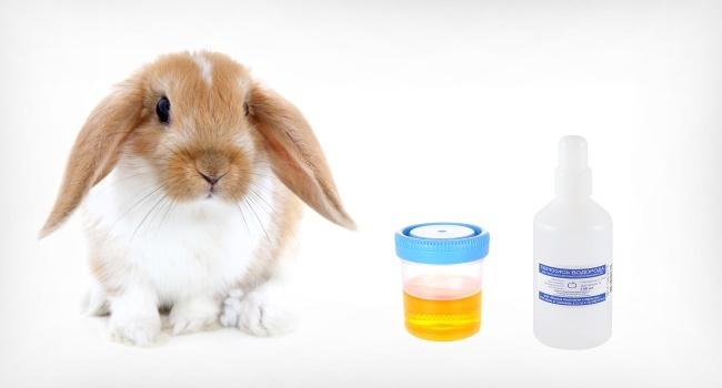 Кролик и тест дома