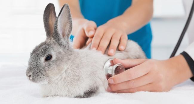 Кролик у доктора