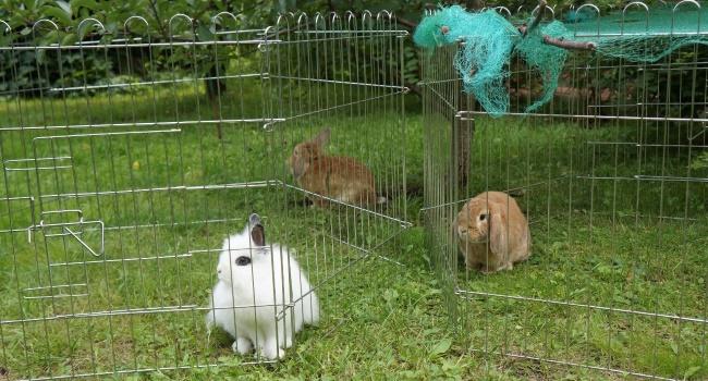 Кролики в разных вольерах