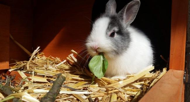 Кролик ест листок