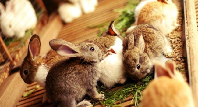 Кролики и еда