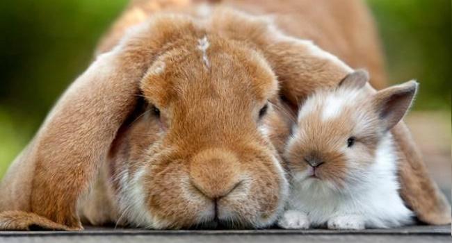 Кролики разного возраста