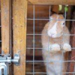 Кролик в деревянной клетке