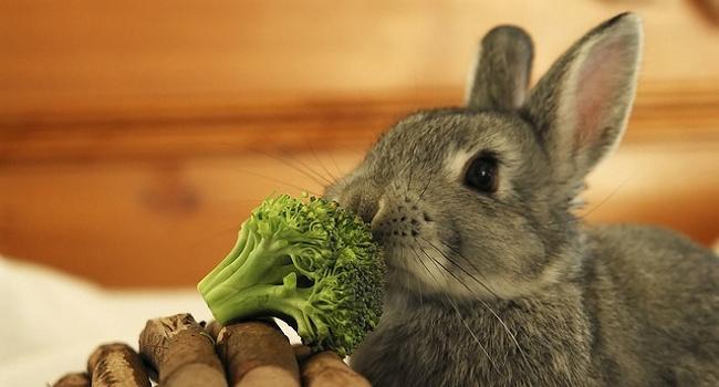 Кролик и брокколи