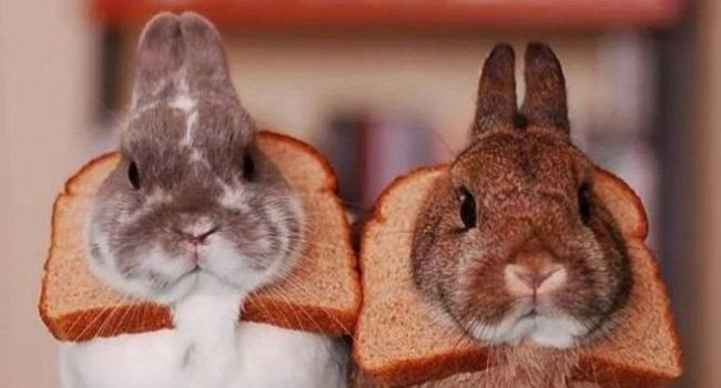 Кролики и хлеб