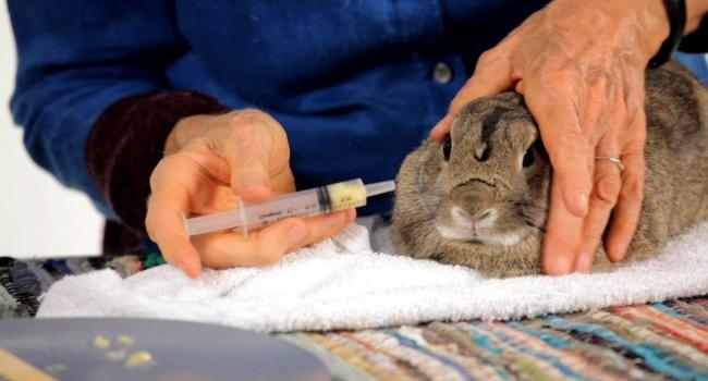Лекарство для кролика