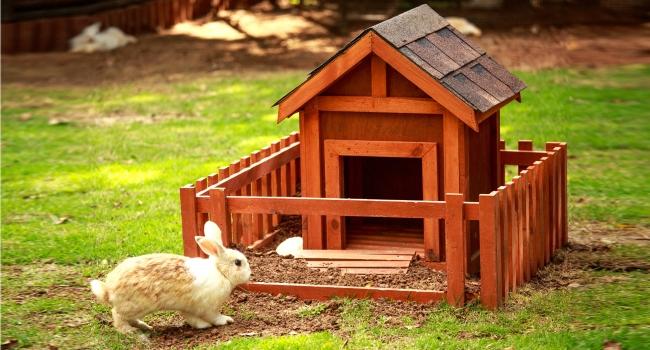 Домик для кролика своими руками